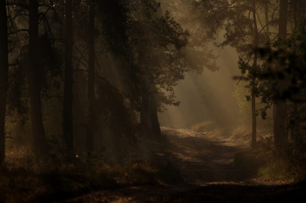 forest-938635_1920